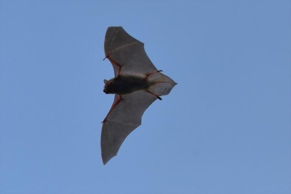 蝙蝠20190505
