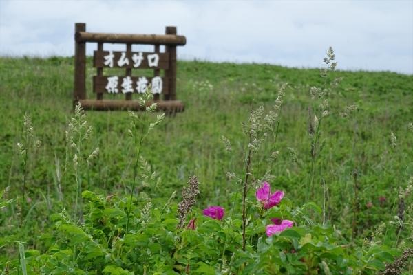 オムサロ原生花園20190613