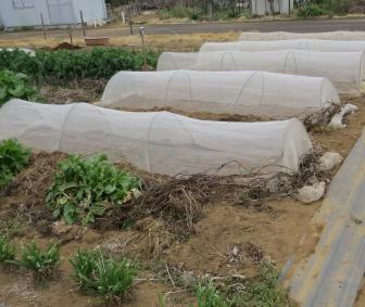 菜園と防虫ネット4月上旬