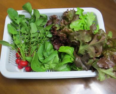旬の収穫物(3月下旬)