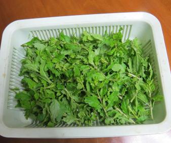 クコの葉収穫物