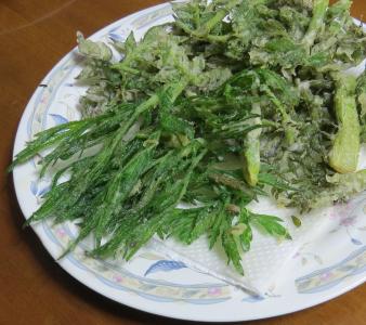 ヨモギとタラの芽天ぷら