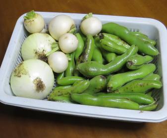 ソラマメ収穫物