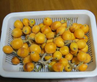ビワ収穫物6月