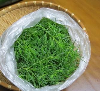 オカヒジキ収穫物