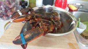 lobster-03