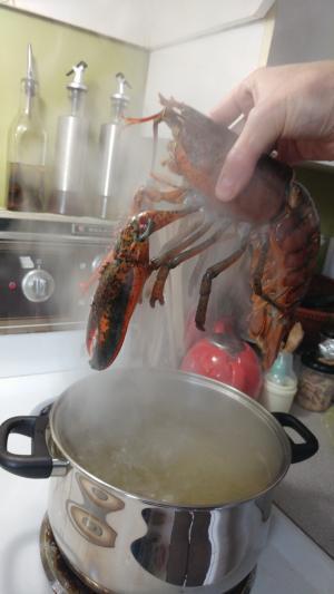 lobster-04
