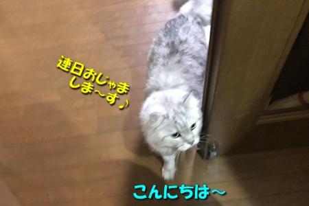 ばあちゃん家お散歩編2