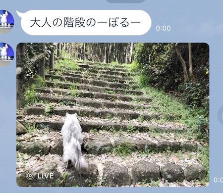ばあちゃん家お散歩編10