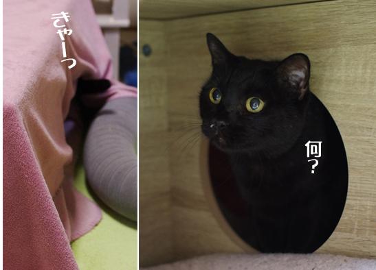 うふぃdfdfd定 1のコピー