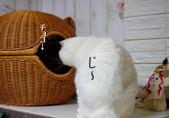 ういうytytytコピー