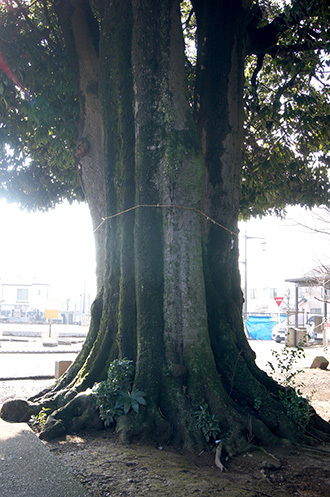 190305久喜御嶽神社カシ④