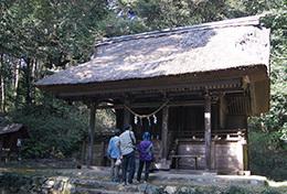 190420綱神社のスダジイ⑨