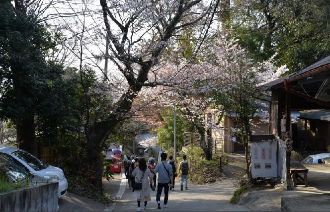 2019-4-9本日の桜6日の吉野