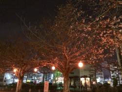 190329_13三本松の桜