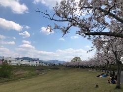 190405_01百年公園桜