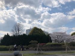 190405_02シンガーと桜