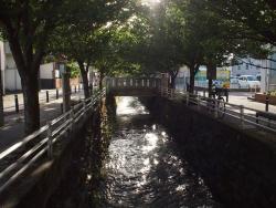 190523_11①鯉さん橋