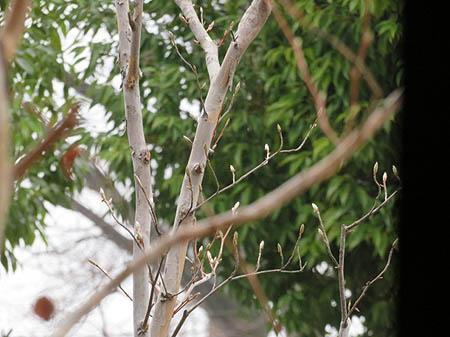0401窓の外の芽吹き