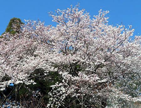 0407烏子神社