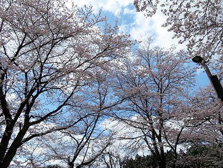 0411箕郷公園3