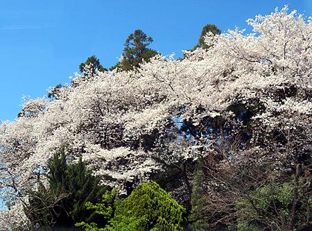 0414烏子稲荷神社
