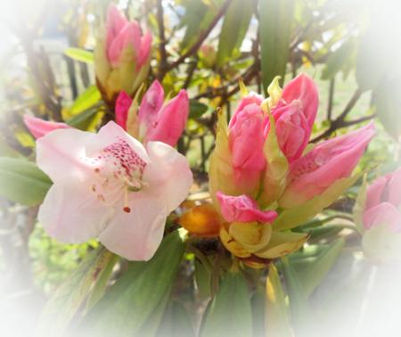 0421 石楠花サイズ