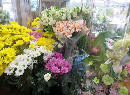 0429キ-パ-お花