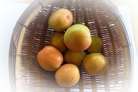 0611杏も
