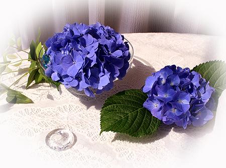 0623紫陽花 アジサイ