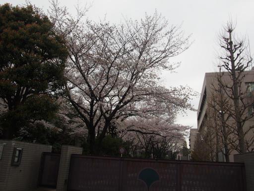 20190330・東京さ空09