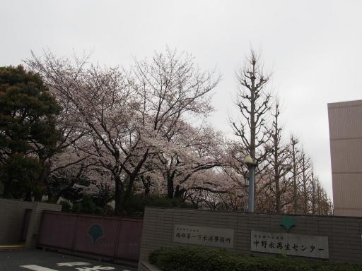 20190330・東京さ空08・水再生センターの桜