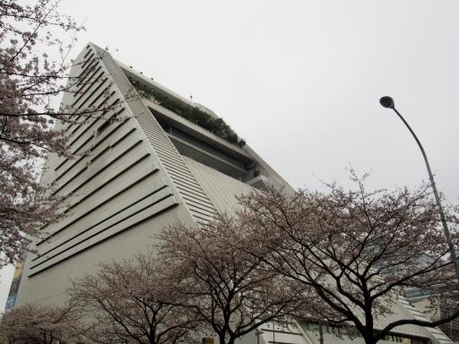 20190330・東京さ空16・サンプラザと桜・大