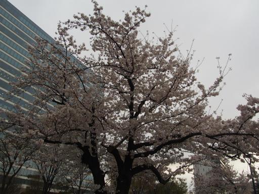 20190330・東京さ空19