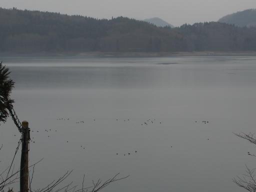 20190414・長野旅行3-08・青木湖(南部)