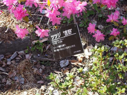 20190415・長野旅行7-10