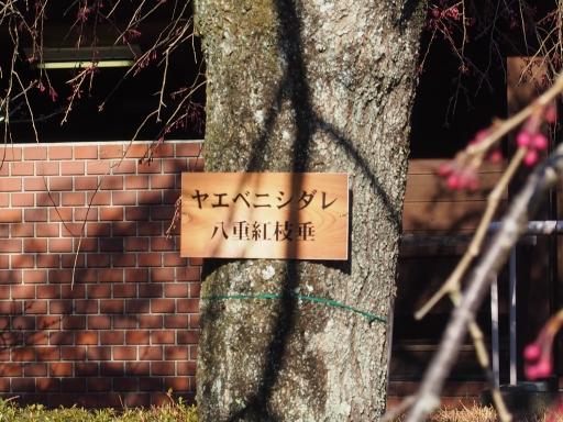20190415・長野旅行9-04・中