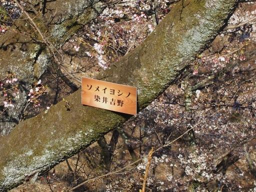 20190415・長野旅行9-08・中