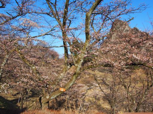 20190415・長野旅行9-07