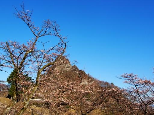 20190415・長野旅行植物桜・妙義1・大