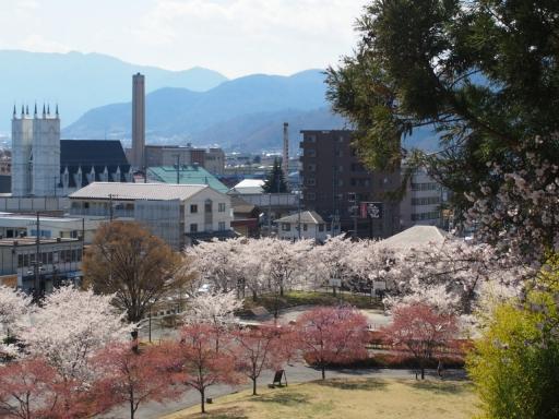 20190415・長野旅行植物桜・上田城2・大