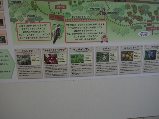 20190415・長野旅行植物鷹狩山資料4・大