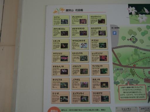 20190415・長野旅行植物鷹狩山資料3・大