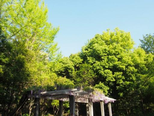 20190505・5月5日の空14・椿峰中央公園・大