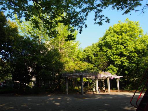 20190505・5月5日カメさんと散歩10