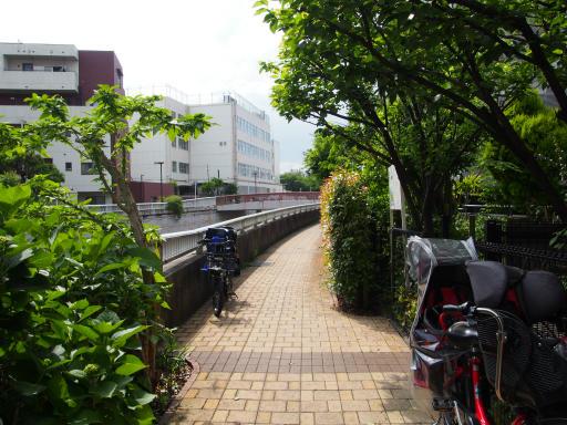 20190518・新宿中野散歩1-19・緑多い遊歩道