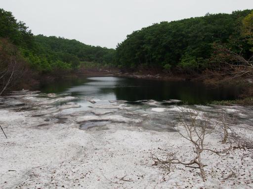 20190602・鍋倉高原旅行3-17・この季節だけの池