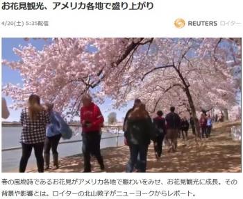 newsお花見観光、アメリカ各地で盛り上がり