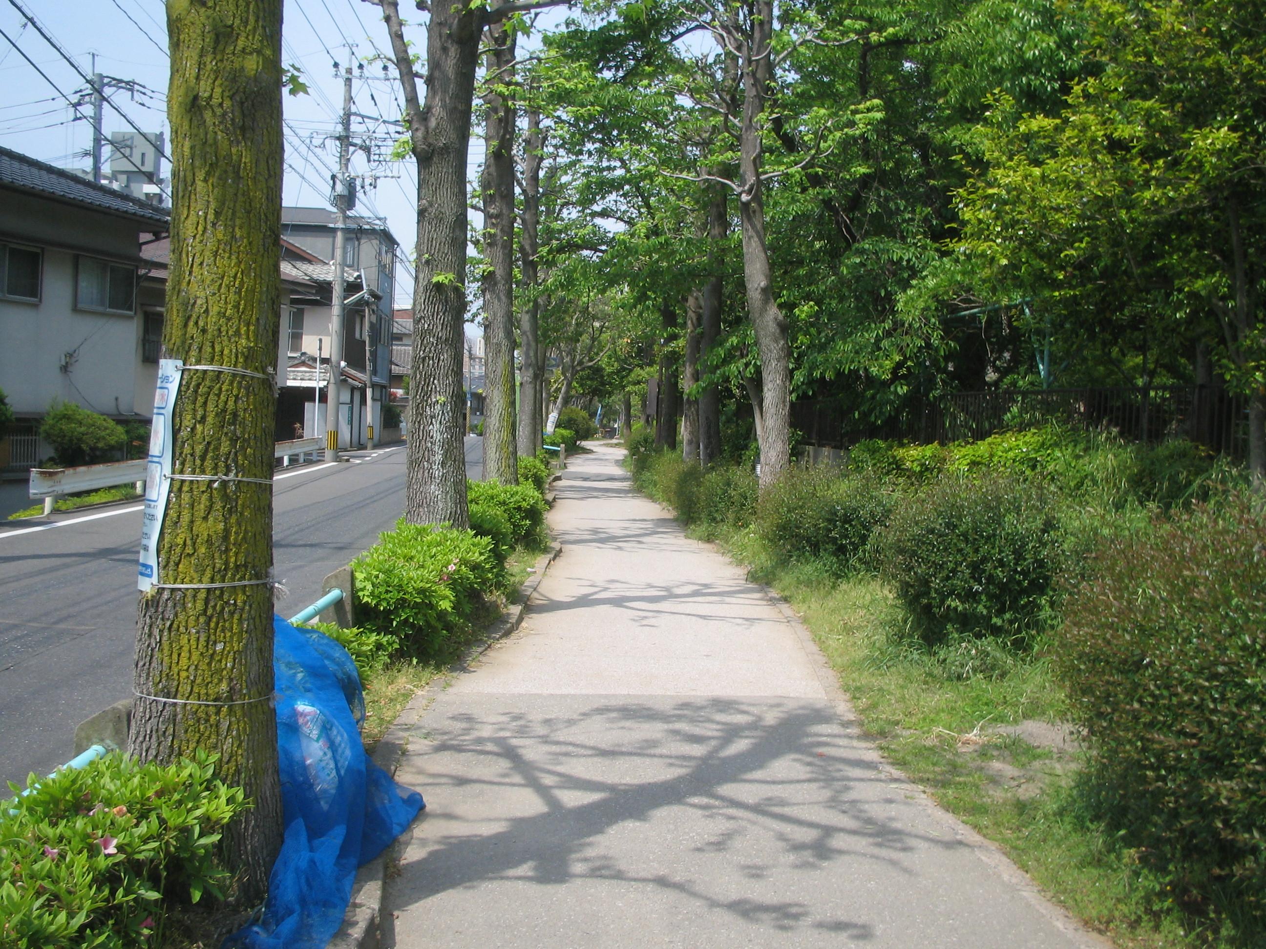 ryokudou1.jpg