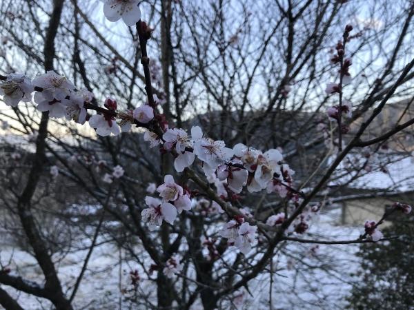 90402-春の雪
